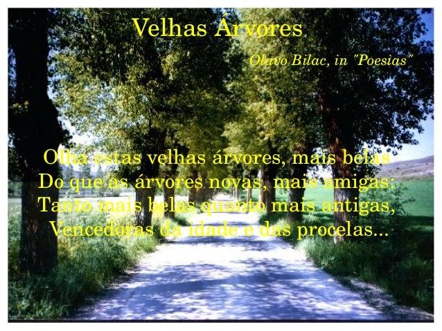 """VelhasÁrvores                      OlavoBilac,in""""Poesias""""Olhaestasvelhasárvores,maisbelasDoqueasárvoresnova..."""