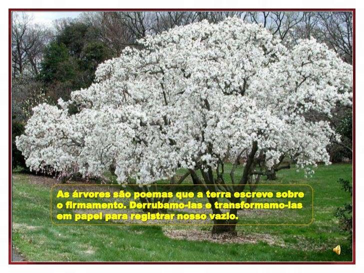 As árvores são poemas que a terra escreve sobreo firmamento. Derrubamo-las e transformamo-lasem papel para registrar nosso...