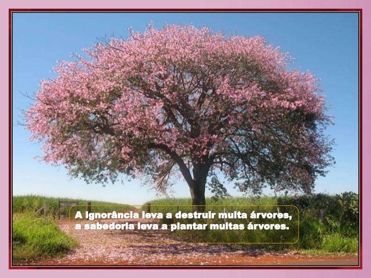 Conhecido Arvores são poemas QY03