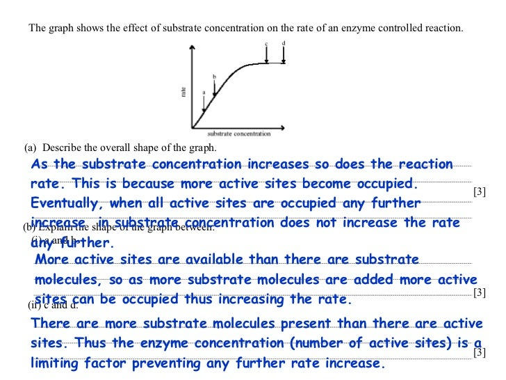the effect of substrate concentration on This shows a clearer picture on the effect of concentration of substrate on the rate of reaction initially, there is an increase in the rate of reaction when the mass of blended potato increases this is because the increase in the concentration of enzyme offers more active site for the binding of substrate.