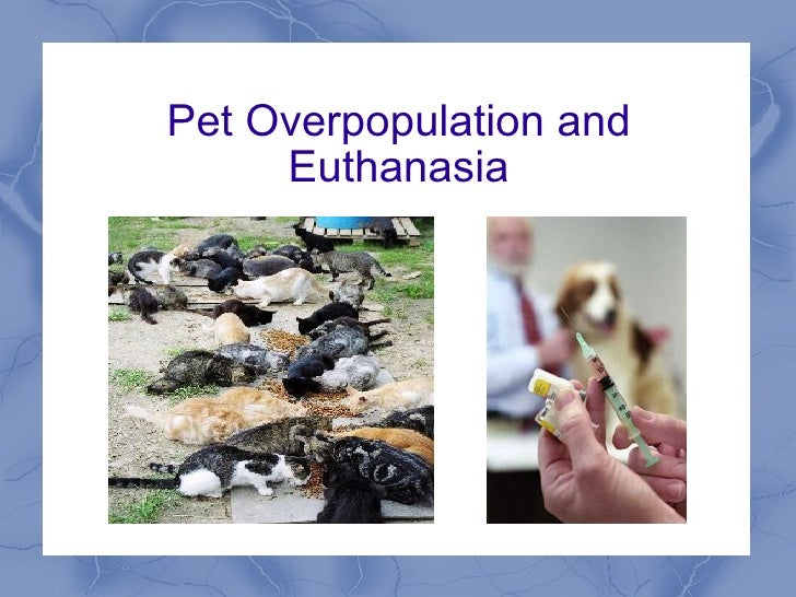 Pet Overpopulation and Euthanasia