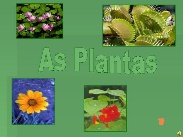 As plantas são indispensáveis à vida na Terra.Onde há plantas, há vida. Com as plantas, o ar é mais      puro e há aliment...