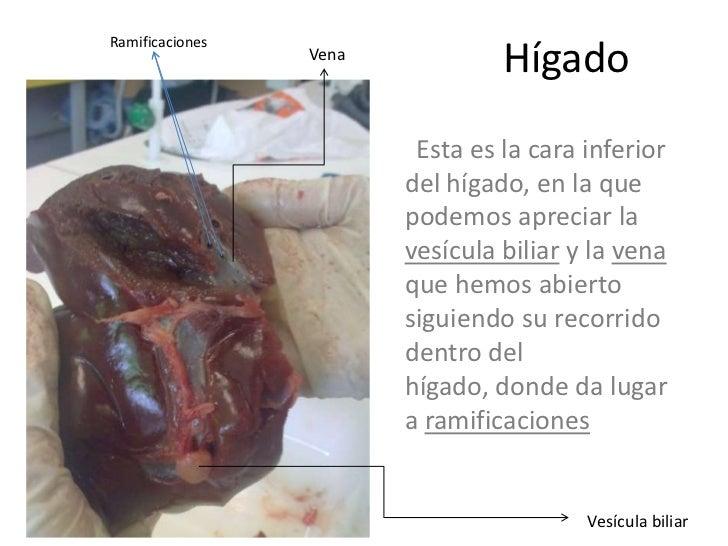 Pulmón, corazón e hígado de cordero