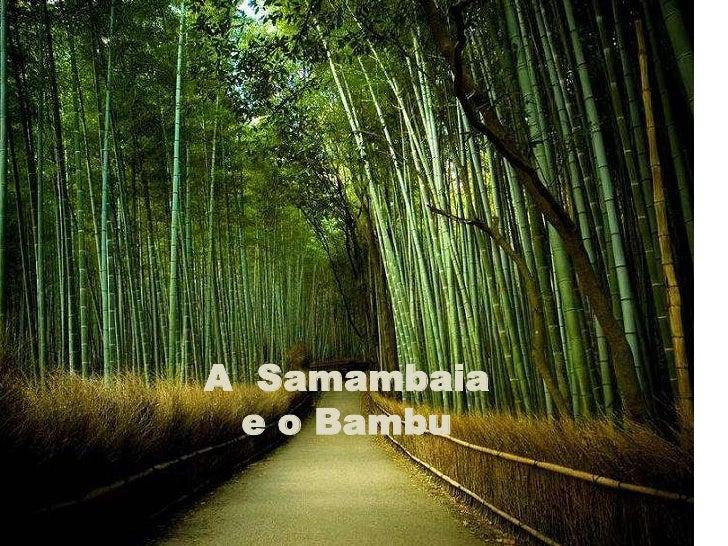 A Samambaia  e o Bambu