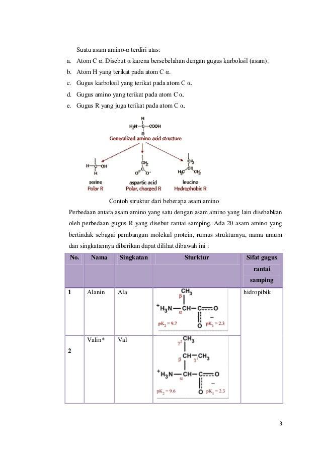 Asam Amino Peptida Protein
