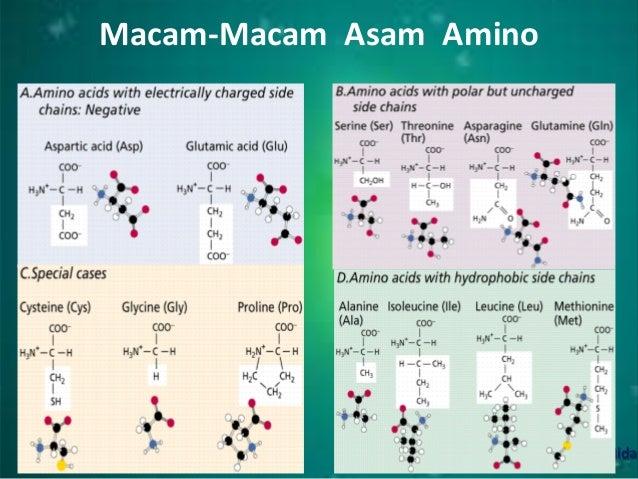 Asam amino, protein dan enzim