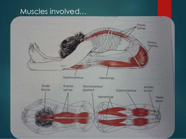 Asana anatomy