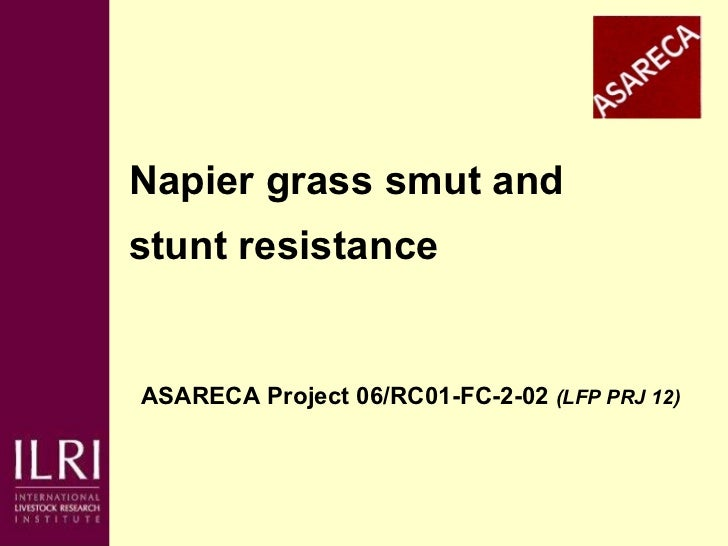 Napier grass smut and  stunt resistance ASARECA Project 06/RC01-FC-2-02  (LFP PRJ 12)   Presented at the ASARECA/ILRI Work...