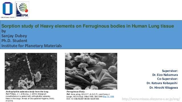 Asbestos Fibers In Lungs : Asbestos bodies formation studies in human lung