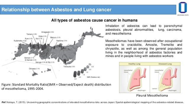 Asbestos Bodies Formation Studies In Human Lung