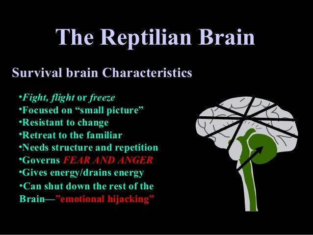 Image result for the reptilian brain