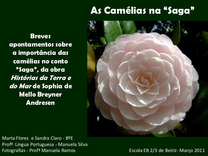 """As Camélias na """"Saga""""         Breves   apontamentos sobre    a importância das    camélias no conto     """"Saga"""", da obra   ..."""