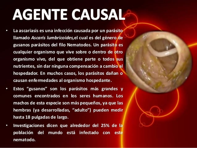 El organismo de los amos la seta el parásito los indicios la enfermedad