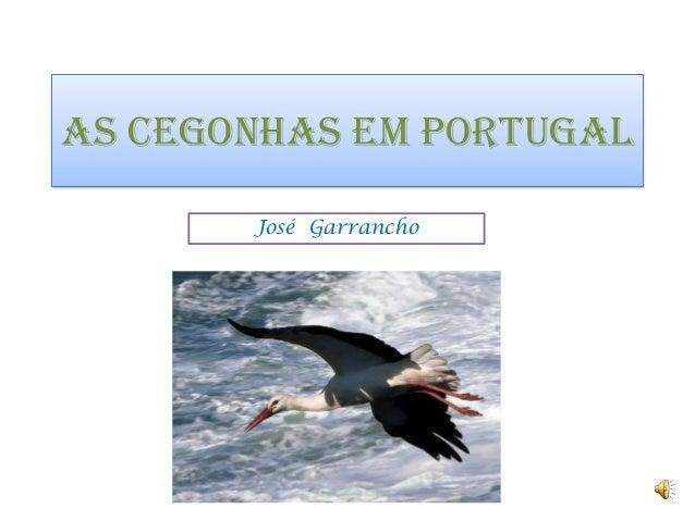 AS CEGONHAS EM PORTUGAL       José Garrancho