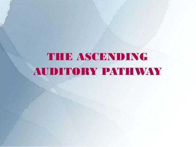 THE ASCENDINGAUDITORY PATHWAY