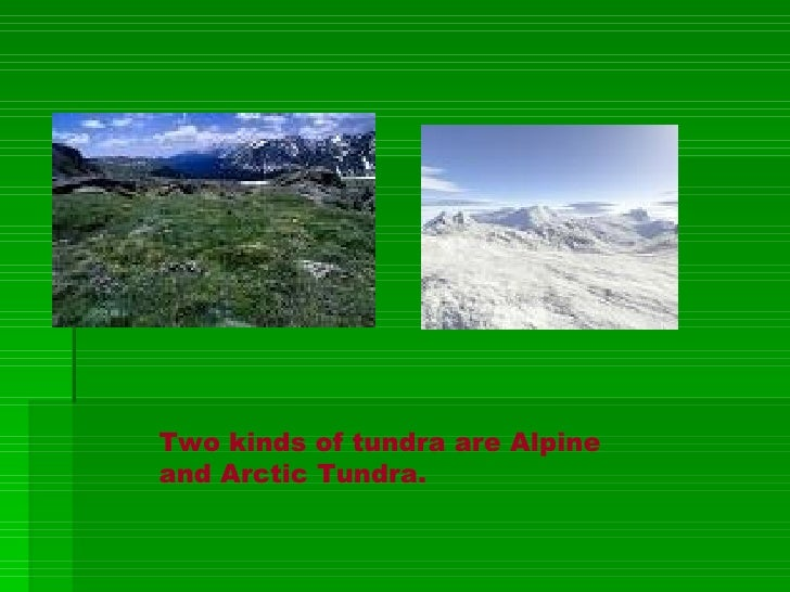 Two Kinds Of Tundra Are Alpine And Arctic
