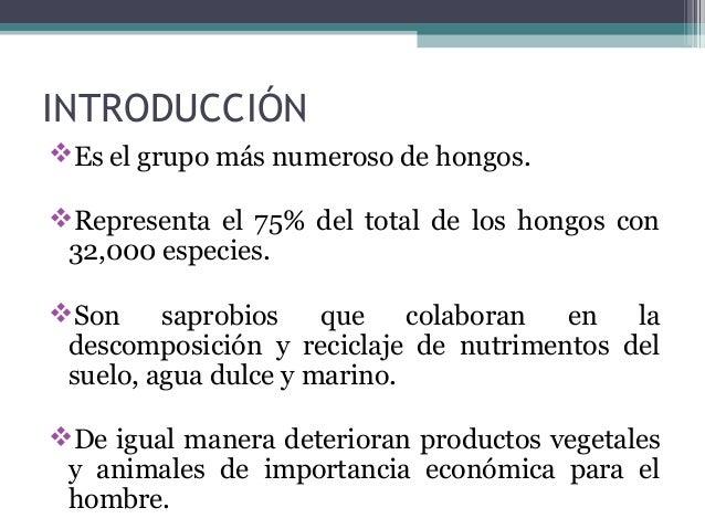 INTRODUCCIÓN Es el grupo más numeroso de hongos. Representa el 75% del total de los hongos con 32,000 especies. Son sap...