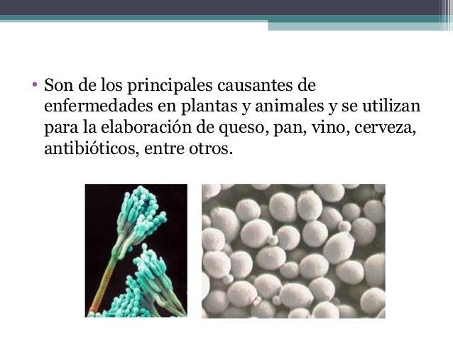 • Son de los principales causantes de enfermedades en plantas y animales y se utilizan para la elaboración de queso, pan, ...