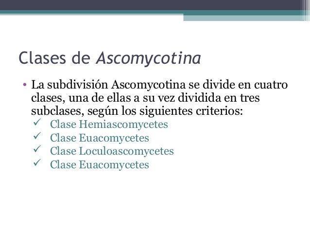 Orden Protomycetales • Comprende una sola familia, Protomycetaceae, con especies de hongos parásitos intracelulares de pla...
