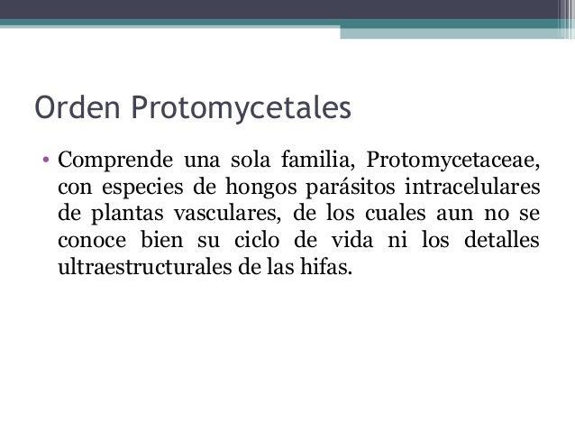 Orden Taphrinales • Las ascas provienen de celulas ascógenas binucleadas, que se generan de manera semejante a las clamidi...