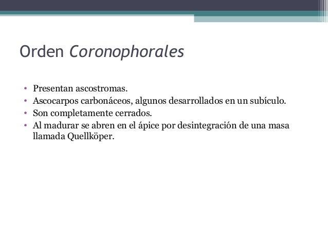 • Discomicetes inoperculados comprenden comprenden los siguientes órdenes: -Phacidiales: apotecios en estroma. -Ostropales...