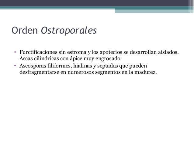 Orden Pizizales • Hongos operculados. • Apotecios presentan forma de copa. • Algunos diferenciados en estípite y píleo.