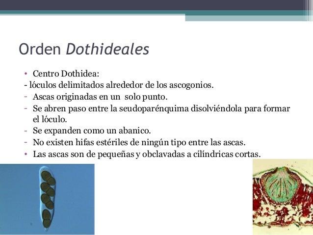 Literatura consultada • Teofilo Herrera/ Miguel Ulloa, Reino de los hongos, 1990 • http://www.amanitacesarea.com/guia_clas...