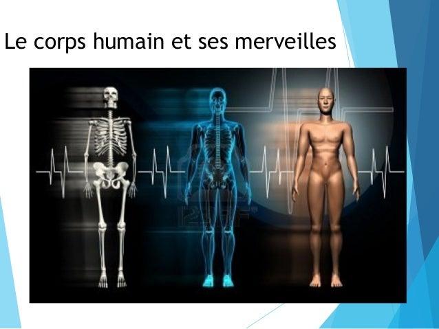 Le corps humain et ses merveilles