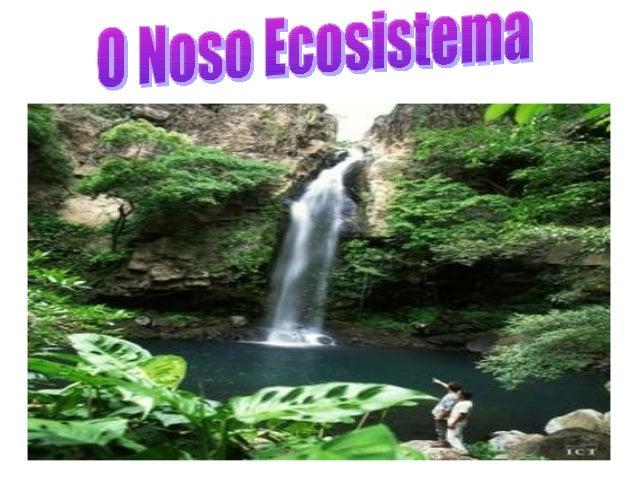 Un ecosistema é un conxunto formado por seres vivos e o seu medio físico.O noso ecosistema é   A SELVA