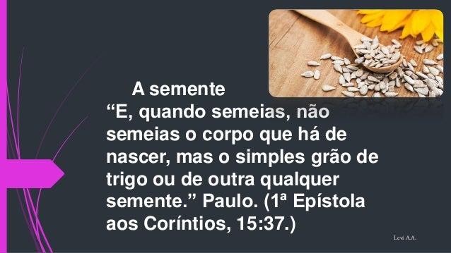 """A semente """"E, quando semeias, não semeias o corpo que há de nascer, mas o simples grão de trigo ou de outra qualquer semen..."""