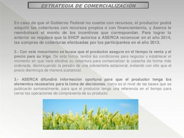 ESTRATEGIA DE COMERCIALIZACIÓN En caso de que el Gobierno Federal no cuente con recursos, el productor podrá adquirir las ...