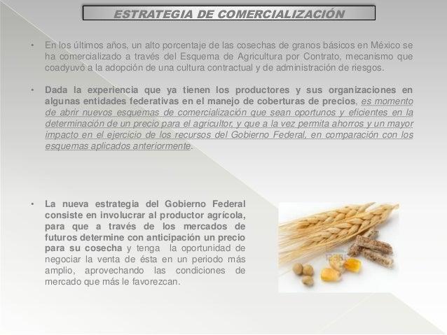 ESTRATEGIA DE COMERCIALIZACIÓN • En los últimos años, un alto porcentaje de las cosechas de granos básicos en México se ha...