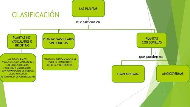 Tipos de plantas y clasificación