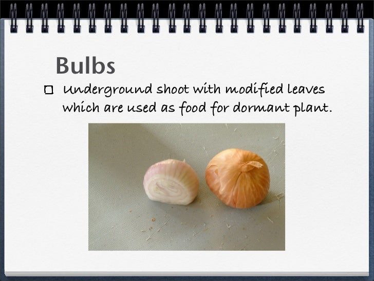 Bulbs asexual reproduction definition