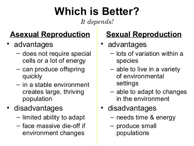 What is an advantage of asexual reproduction