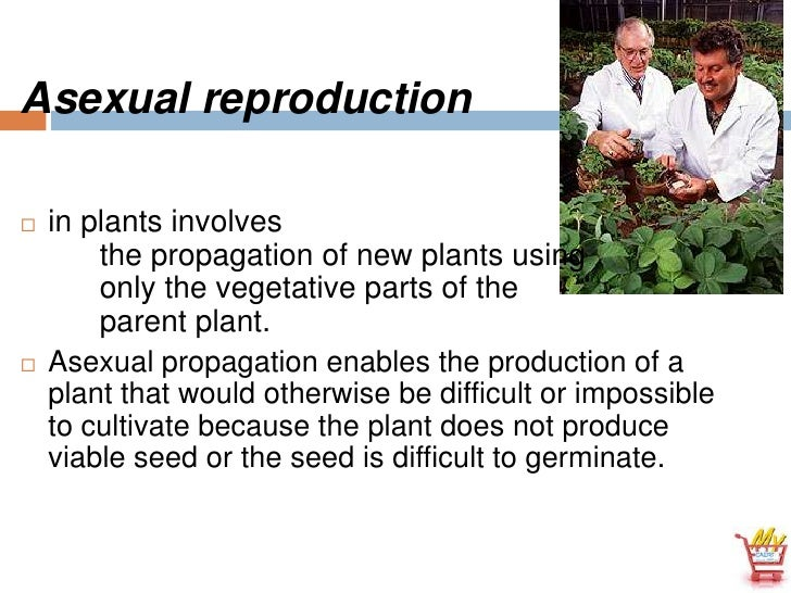 What is asexual propagation in plants