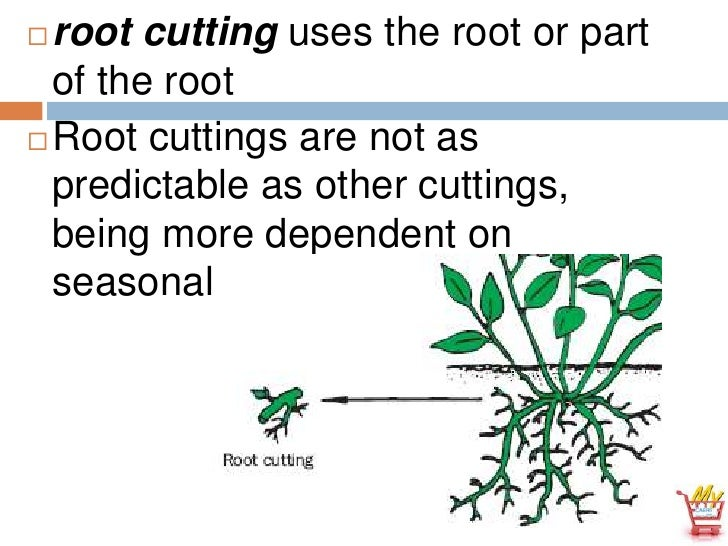 Asexual reproduction cuttings definition