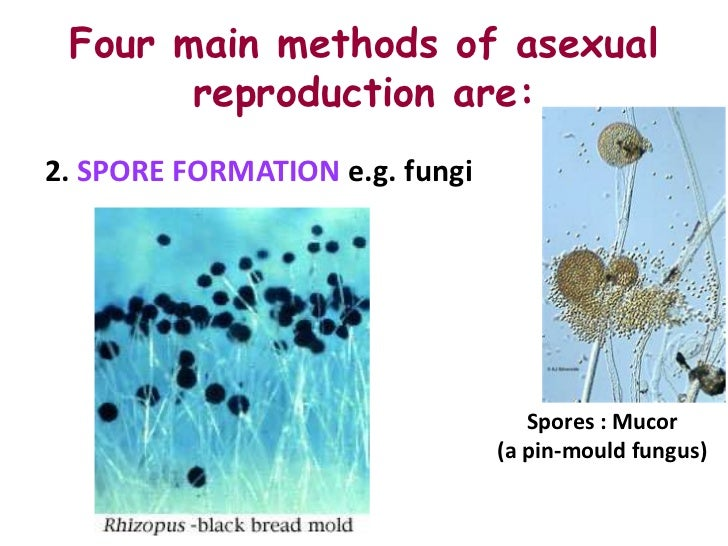 Different ways of asexual reproduction