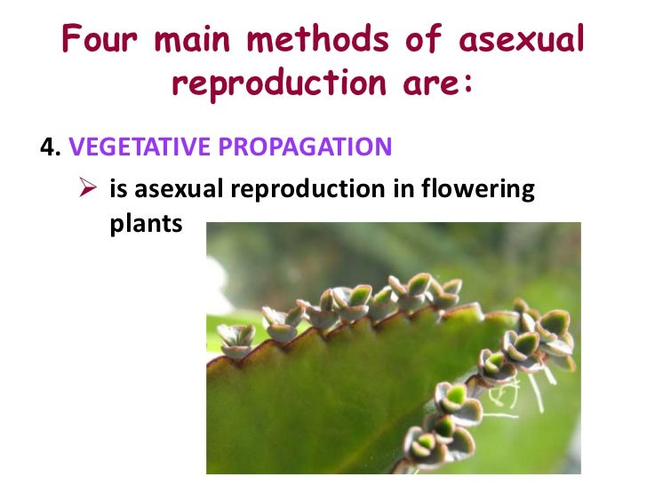 Asexual reproduction in plants is also known as vegetative propagation