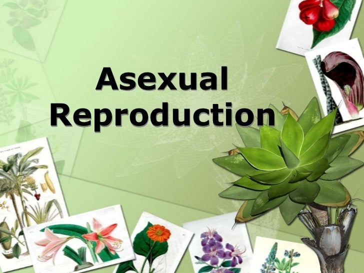 What things reproduce asexually
