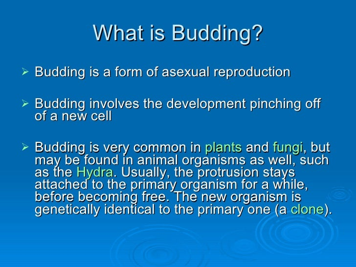 Prokaryotic reproduction budding asexual reproduction
