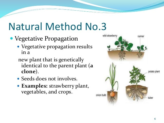 Three methods of asexual reproduction in plants