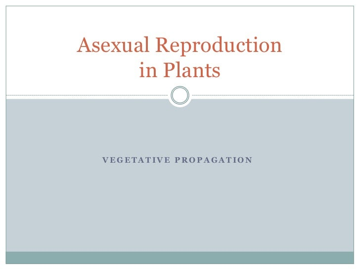 Asexual reproduction of a flowering plant