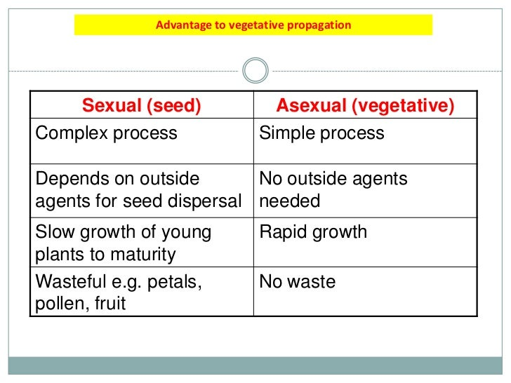 Asexual plant reproduction advantages