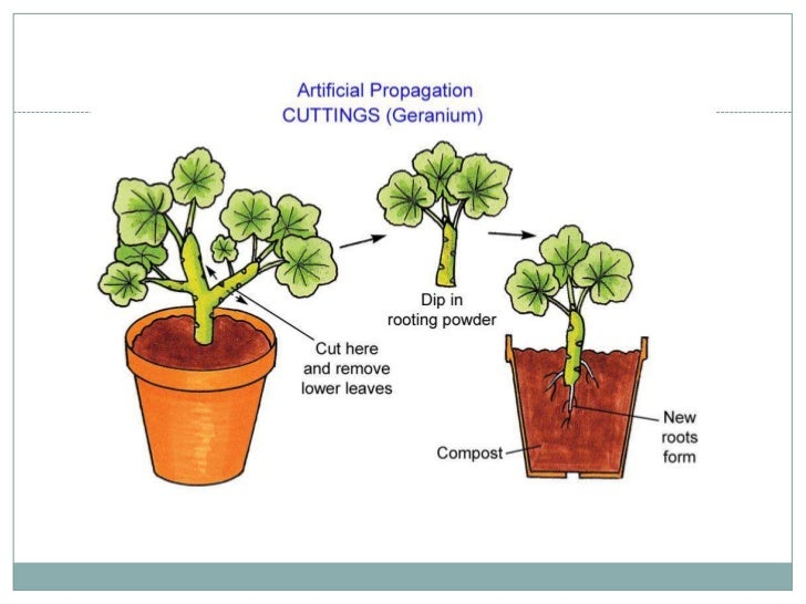 Asexual plants images cartoon