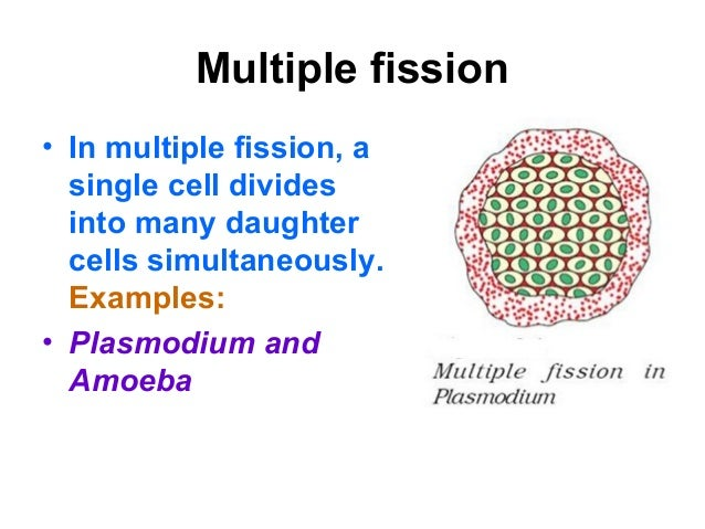 Fission asexual reproduction definition
