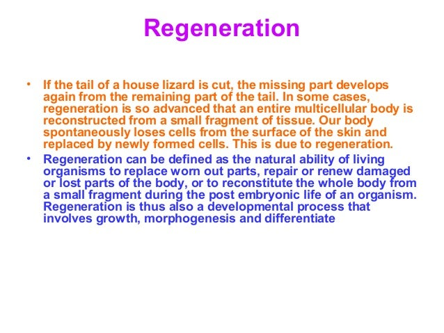Fragmentation asexual reproduction ppt