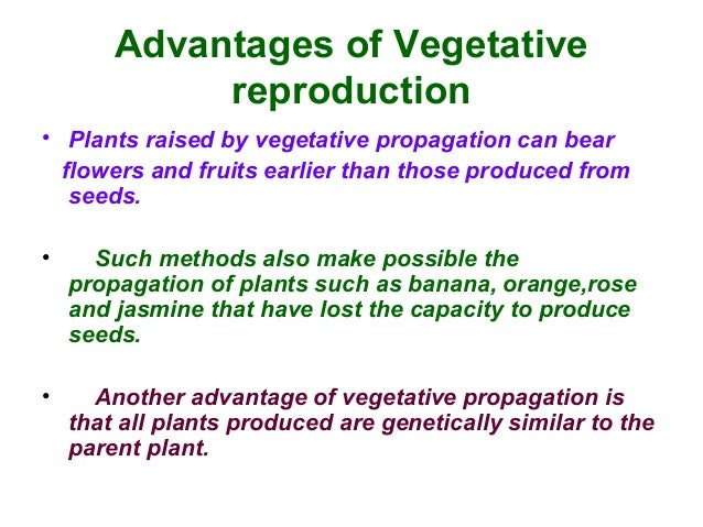 Asexual propagation ppt presentation