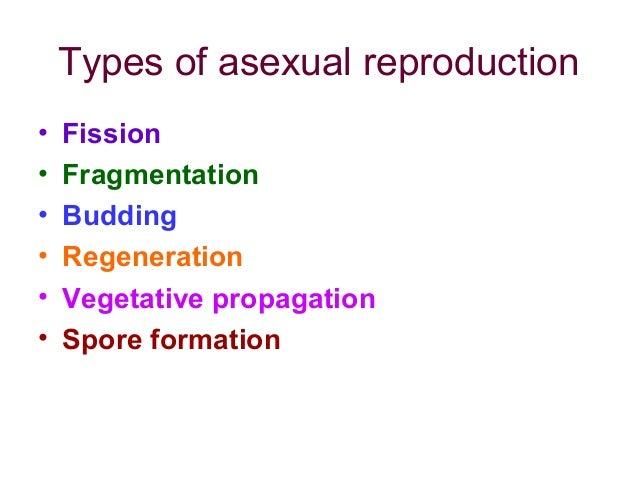 Monera asexual reproduction regeneration