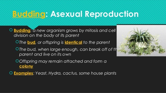 House plant asexual reproduction